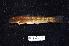 (Sicyopterus sp - BIF2626)  @11 [ ] CreativeCommons – Attribution Non-Commercial Share-Alike (2014) Nicolas HUBERT IRD