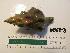 (Kelletia - KEKE-3)  @11 [ ] No Rights Reserved (2013) Unspecified Coastal Marine Biolabs