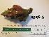 ( - KEKE-6)  @11 [ ] No Rights Reserved (2013) Unspecified Coastal Marine Biolabs