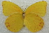 (Prestonia - BIOUG08726-E12)  @14 [ ] CreativeCommons - Attribution Non-Commercial Share-Alike (2013) BIO Photography Group Biodiversity Institute of Ontario