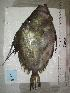 ( - MT04197)  @12 [ ] Unspecified (default): All Rights Reserved (2013) Thomas Knebelsberger Deutsches Zentrum fuer Marine Biodiversitaetsforschung