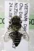  (Megachile paracellaVNM01 - CCDB-14506-G7)  @11 [ ] CreativeCommons - Attribution Non-Commercial Share-Alike (2012) Packer Collection York University York University