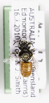  (Megachile abdominalis - CCDB-09843 A05)  @11 [ ] Unspecified (default): All Rights Reserved (2011) Unspecified York University