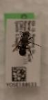 (Atoposmia copelandica albomarginata - CCDB-22791 E12)  @11 [ ] Unspecified (default): All Rights Reserved (2014) Packer Collection York University York University