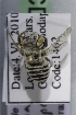  (Megachile sp. nov aff impressipuncta - CCDB-14514-B07)  @11 [ ] CreativeCommons - Attribution Non-Commercial Share-Alike (2012) Packer Collection York University York University