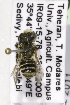  (Megachile sp. aff rotundata - CCDB-14514-D04)  @11 [ ] CreativeCommons - Attribution Non-Commercial Share-Alike (2012) Packer Collection York University York University