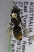  (Megachile AUS1 - CCDB-14515-G07)  @11 [ ] CreativeCommons - Attribution Non-Commercial Share-Alike (2012) Packer Collection York University York University