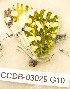  ( - CCDB-03029 G10)  @14 [ ] Copyright (2012) Zoological Institute of the Russian Academy of Science Zoological Institute of the Russian Academy of Science