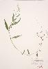 ( - JH 011)  @11 [ ] Copyright (2009) Unspecified University of Guelph BIO Herbarium
