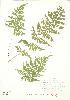 ( - JEM 153)  @11 [ ] Copyright (2009) Unspecified University of Guelph BIO Herbarium