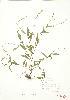 ( - JEM 097)  @11 [ ] Copyright (2009) Unspecified University of Guelph BIO Herbarium