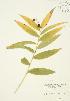 ( - JAG 0246)  @11 [ ] Copyright (2009) Unspecified University of Guelph BIO Herbarium