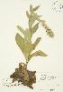 ( - JAG 0247)  @11 [ ] Copyright (2009) Unspecified University of Guelph BIO Herbarium