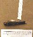 (Petrochelidon fulva - 1B-4566)  @14 [ ] CreativeCommons - Attribution (2010) Unspecified Royal Ontario Museum