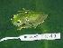 (Hyalinobatrachium chirripoi - AJC 1841)  @14 [ ] CreativeCommons - Attribution Non-Commercial Share-Alike (2010) Copyright Andrew J. Crawford Smithsonian Tropical Research Institute