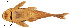 (Chaetostoma fischeri - stri-6753)  @15 [ ] Unspecified (default): All Rights Reserved  Unspecified Unspecified