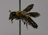  (Megachile VNM06 - CCDB-01563 D04)  @11 [ ] CreativeCommons - Attribution Non-Commercial Share-Alike (2010) Unspecified York University