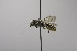  (Megachile chelostomoides - B03772 E05-MEX)  @11 [ ] CreativeCommons - Attribution Non-Commercial Share-Alike (2010) Unspecified York University