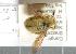 (Xylocopa stanleyi - CCDB-22790 C03)  @11 [ ] PCYU (2014) Unspecified York University