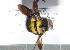 (Xylocopa somalica - CCDB-22790 C11)  @11 [ ] PCYU (2014) Unspecified York University
