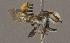 (Megachile fullawayi - CCDB-22790 D05)  @14 [ ] PCYU (2014) Unspecified York University
