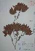 (Myricaceae - Mtz29253)  @11 [ ] Unspecified (default): All Rights Reserved  Gerardo Salazar 2010 Unspecified
