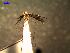 (Anopheles albitarsis - MACN-Bar-Ins-ct 04642)  @14 [ ] Copyright (2012) MACN MACN