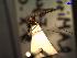 (Anopheles argyritarsis - MACN-Bar-Ins-ct 04721)  @12 [ ] Copyright (2012) MACN MACN