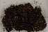 (Polytrichum piliferum - Robillard_EMPM82_CAN)  @11 [ ] Copyright (2012) Canadian Museum of Nature Canadian Museum of Nature