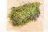 (Brachythecium campestre - Robillard_EMPM99_CAN)  @13 [ ] Copyright (2012) Canadian Museum of Nature Canadian Museum of Nature