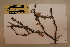 (Macropteranthes - CNS_CC_6079_G12)  @11 [ ] Copyright (2010) Australia Tropical Herbarium CSIRO, Queensland Government and James Cook University