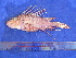  (Pterois russelii - SA8JZ093)  @11 [ ] Unspecified (default): All Rights Reserved  Unspecified Unspecified