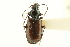 (Bembidion sulcipenne prasinoides - CNC COLEO 00118152)  @13 [ ] CreativeCommons - Attribution Non-Commercial Share-Alike (2011) CNC/BIO Photography Group Biodiversity Institute of Ontario