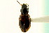 (Bembidion convexulum - CNC COLEO 00118330)  @11 [ ] CreativeCommons - Attribution Non-Commercial Share-Alike (2011) CNC/BIO Photography Group Biodiversity Institute of Ontario