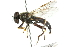  ( - CNC DIPTERA 102725)  @13 [ ] CreativeCommons - Attribution Non-Commercial Share-Alike (2011) CNC/BIO Photography Group Biodiversity Institute of Ontario