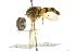 (Vockerothia - CNC DIPTERA 105523)  @11 [ ] CreativeCommons - Attribution Non-Commercial Share-Alike (2011) CNC/BIO Photography Group Biodiversity Institute of Ontario