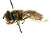  ( - CNC DIPTERA 105694)  @11 [ ] CreativeCommons - Attribution Non-Commercial Share-Alike (2011) CNC/BIO Photography Group Biodiversity Institute of Ontario