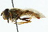  ( - CNC DIPTERA 105695)  @11 [ ] CreativeCommons - Attribution Non-Commercial Share-Alike (2011) CNC/BIO Photography Group Biodiversity Institute of Ontario