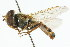  ( - CNC DIPTERA 105697)  @11 [ ] CreativeCommons - Attribution Non-Commercial Share-Alike (2011) CNC/BIO Photography Group Biodiversity Institute of Ontario