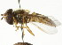  ( - CNC DIPTERA 16008)  @11 [ ] CreativeCommons - Attribution Non-Commercial Share-Alike (2011) CNC/BIO Photography Group Biodiversity Institute of Ontario