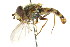  ( - CNC DIPTERA 35053)  @11 [ ] CreativeCommons - Attribution Non-Commercial Share-Alike (2011) CNC/BIO Photography Group Biodiversity Institute of Ontario