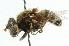 (Eristalis cryptarum - CNC DIPTERA 44088)  @14 [ ] CreativeCommons - Attribution Non-Commercial Share-Alike (2011) CNC/BIO Photography Group Biodiversity Institute of Ontario