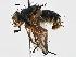 (Parerigonini - CNC DIPTERA 197531)  @15 [ ] CreativeCommons - Attribution Non-Commercial Share-Alike (2013) BIO Photography Group/CNC Biodiversity Institute of Ontario