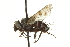 (Homalactia - CNC DIPTERA 162267)  @14 [ ] CreativeCommons - Attribution Non-Commercial Share-Alike (2012) CNC/BIO Photography Group Biodiversity Institute of Ontario
