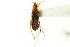 (Macroveliidae - CNC#HEM302899)  @11 [ ] CreativeCommons - Attribution Non-Commercial Share-Alike (2011) CNC/BIO Photography Group Biodiversity Institute of Ontario