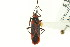  (Caenocoris - CNC#HEM400583)  @11 [ ] CreativeCommons - Attribution Non-Commercial Share-Alike (2011) CNC/BIO Photography Group Biodiversity Institute of Ontario