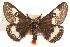 (Hemileuca grotei - BIOUG10886-D09)  @11 [ ] CreativeCommons - Attribution Non-Commercial Share-Alike (2014) BIO Photography Group Biodiversity Institute of Ontario