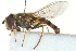  ( - CNC DIPTERA 162917)  @11 [ ] CreativeCommons - Attribution Non-Commercial Share-Alike (2012) CNC/BIO Photography Group Biodiversity Institute of Ontario