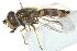  ( - CNC DIPTERA 162918)  @13 [ ] CreativeCommons - Attribution Non-Commercial Share-Alike (2012) CNC/BIO Photography Group Biodiversity Institute of Ontario
