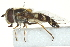  ( - CNC DIPTERA 162922)  @13 [ ] CreativeCommons - Attribution Non-Commercial Share-Alike (2012) CNC/BIO Photography Group Biodiversity Institute of Ontario